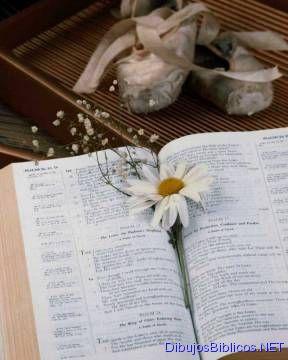 biblia_23.jpg